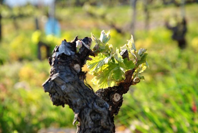1361-Federation-Vin-Vallee-Rhone-Vignerons-Rouge-Blanc-Syndicat-Appellation-Crus